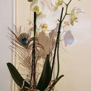 Orchidée décorée avec cache-pot