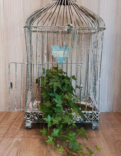 Lierre en cage décorée