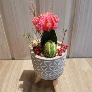 Cactus avec pot sur trépied