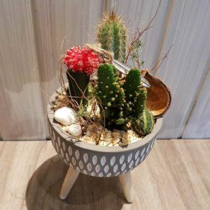 Plantation de cactus dans un pot sur trépied