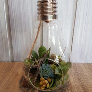 Ampoule de plantes grasses